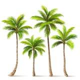 Drzewka palmowe ustawiający wektor ilustracja wektor