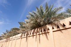 Drzewka Palmowe w Al Ain oazie Fotografia Stock