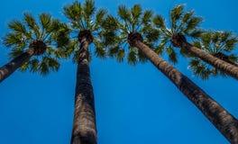 Drzewka palmowe w Ateny parku narodowym Obrazy Royalty Free
