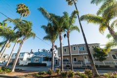 Drzewka palmowe w balboa wyspie obraz royalty free