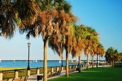 Drzewka palmowe w Charleston nabrzeża parku Obrazy Stock