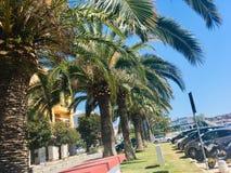 Drzewka palmowe w Chorwacja fotografia stock