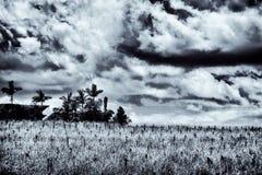 Drzewka palmowe w cmentarzach; jak egzot Zdjęcia Stock