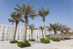 Drzewka palmowe w Doha, Katar Fotografia Stock