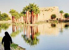 Drzewka palmowe w fezie, Maroko Fotografia Royalty Free