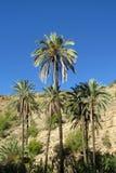 Drzewka palmowe w górach Obraz Royalty Free