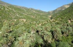 Drzewka palmowe w górach Zdjęcie Stock