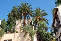 Drzewka palmowe w jardzie, Granada Fotografia Stock
