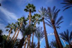 drzewka palmowe w Las Vegas Zdjęcia Royalty Free