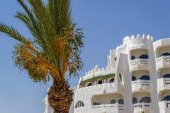 Drzewka palmowe w mieście obrazy royalty free