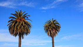 Drzewka palmowe w niebie Obrazy Stock