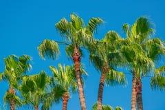 Drzewka palmowe w niebie fotografia stock