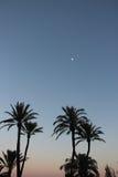 Drzewka palmowe w nocy Obrazy Royalty Free