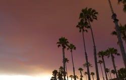 Drzewka Palmowe w Płonącym niebie Obraz Stock