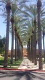 Drzewka palmowe w Phoenix Zdjęcia Royalty Free