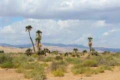 Drzewka palmowe w pustyni Obrazy Royalty Free