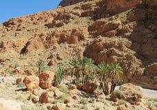 Drzewka palmowe w pustynnych górach Zdjęcia Stock