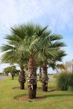 Drzewka palmowe w rekreacyjnym parku fotografia stock