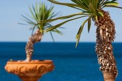 Drzewka palmowe w terra - cotta puszkuje z oceanem w tle w Włochy, Europa Zdjęcia Royalty Free