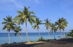 Drzewka palmowe w tropikalnej plaży Obraz Royalty Free