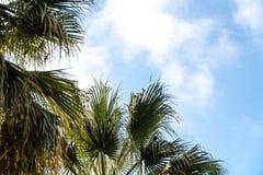 Drzewka palmowe w tropikalnym kurorcie przy pi?knym s?onecznym dniem Wizerunek tropikalny wakacje i pogodny szcz??cie skud?acenia zdjęcie royalty free