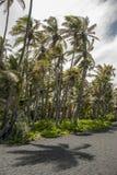 Drzewka palmowe w wiatrze na czarnym piasku wyrzucać na brzeg obrazy royalty free