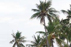 Drzewka palmowe w wiatrze na tropikalnej linii brzegowej w Tajlandia policjant Obrazy Royalty Free