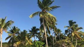 Drzewka palmowe w wiatrze zdjęcie wideo