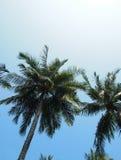 Drzewka palmowe w Wietnam obrazy stock