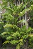 Drzewka palmowe w wiośnie w południowym Floryda Obraz Royalty Free