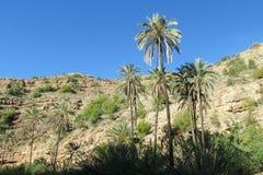 Drzewka palmowe w zwrotnik górach Fotografia Royalty Free