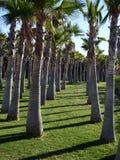 Drzewka palmowe wyrównujący w parku Zdjęcia Stock