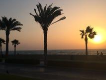 Drzewka palmowe wyrzucać na brzeg zmierzch Zdjęcia Stock