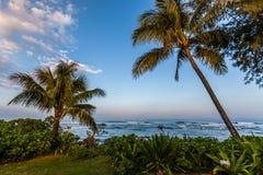 Drzewka palmowe wzdłuż wybrzeża Zdjęcia Royalty Free