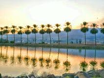 Drzewka palmowe z odbiciem w rybim basenie Zdjęcia Stock