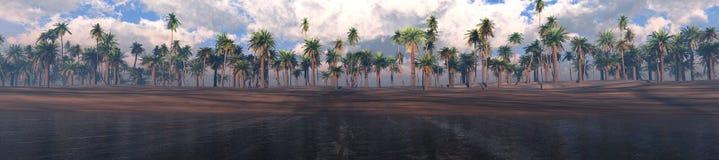 Drzewka palmowe z rzędu Zdjęcie Royalty Free