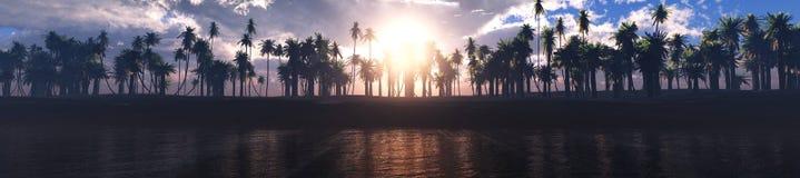 Drzewka palmowe z rzędu Fotografia Royalty Free