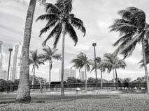 Drzewka palmowe, zielona trawa i ławki w Miami, usa fotografia royalty free