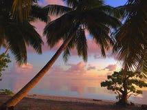 Drzewka Palmowe & zmierzch zdjęcie royalty free