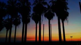 Drzewka palmowe/zmierzch Obraz Stock