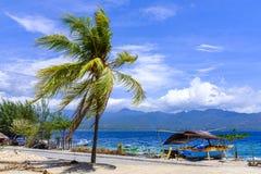 Drzewka palmowego chylenie w wiatrze Obraz Stock