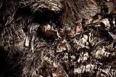 Drzewka Palmowego ciała barkentyna Obraz Stock
