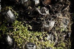 Drzewka Palmowego ciała barkentyna Zdjęcia Stock