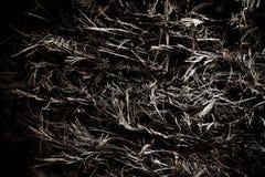 Drzewka Palmowego ciała barkentyna Obrazy Royalty Free