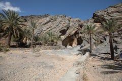 Drzewka palmowego dorośnięcie przed jamą Obraz Stock