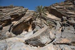 Drzewka palmowego dorośnięcie przed jamą Zdjęcie Royalty Free