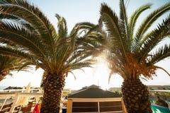 Drzewka palmowego Grecja kurort Obrazy Stock
