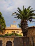 Drzewka palmowego, hiszpańskich i catalan flaga, Fotografia Royalty Free