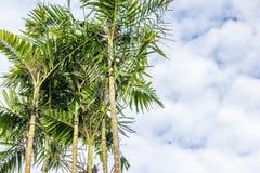 Drzewka palmowego i chmury nieba tło z kopii przestrzenią Zdjęcie Royalty Free