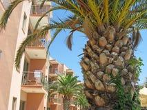 Drzewka palmowego i kondygnaci budynek Zdjęcie Stock